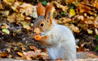 萌翻了!這隻有兔子耳朵的小動物居然是松鼠