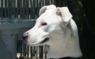 它的脸能够证明 它是世界上最幸福的狗