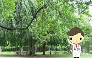 天热别在树下乘凉 会危害健康?专家这样说