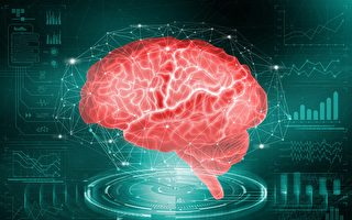 实现人类记忆编辑还有多远?