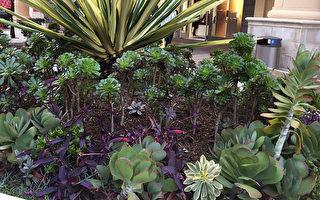 聖地亞哥獎勵以節水景觀取代草坪