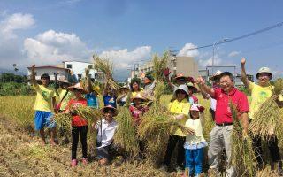 羅農推食農教育 體驗割稻曬穀樂