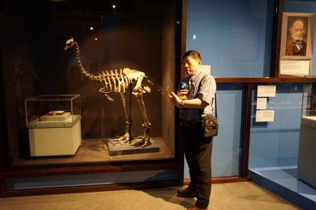 """""""恐鸟""""由理查欧文爵士(右后图片中人物)辨识出来,巨型不会飞的灭绝鸟类。"""