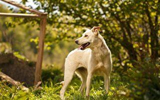 能在帶著花園的英國公寓里養狗嗎?