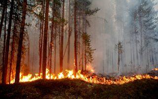 瑞典空投炸弹 控制森林火情