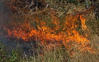 组图:热浪侵袭欧洲国家 野火肆虐灾情严重