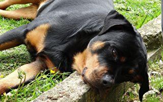 救援犬悲傷與至親離別 畫面觸動百萬網友