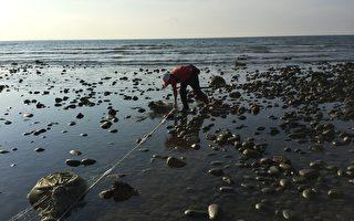 瀕危幼鯊出沒大潭藻礁 學者籲設保護區