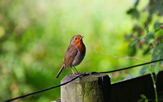鸟儿们依自己的作息,安居于广阔的天地。(Pixabay)