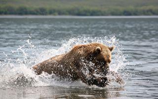 """与熊共""""泳"""" 人生初体验就献给这只熊了"""