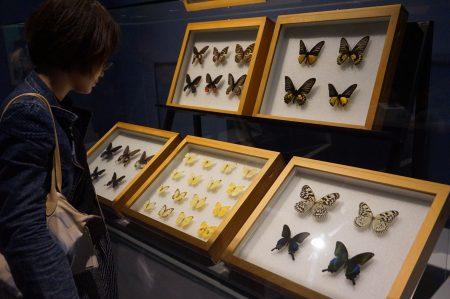 台湾珍贵的蝴蝶。