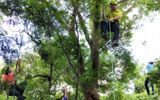 攀上树梢顶峰  员工学习完整攀树技术