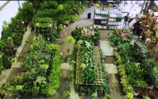 紐約室內植物展八月登場