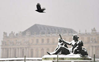 法国主题乐园训练聪明乌鸦捡垃圾
