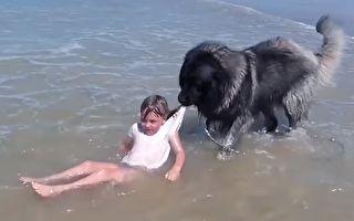 小主人被海浪淹过头 狗狗一举动融化网友心