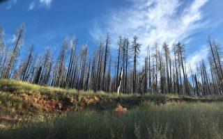 川普指出伐木有助减少野火