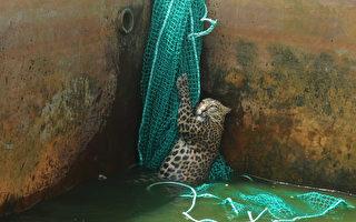 花豹掉入一口大井里 村民架网子木梯救援