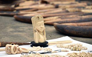 世界大象日 新西蘭保護組織吁禁象牙貿易