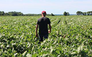 指联邦刺激法案涉嫌歧视白人 佛州农民提告