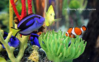 多倫多水族館 Ripley's Aquarium 城市中的海底花園