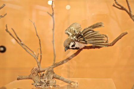 紙雕作品麻雀——羽毛經由美工細緻切劃出來。