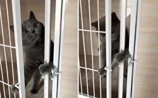 貓解鎖開門被發現:主人你什麼都沒看到