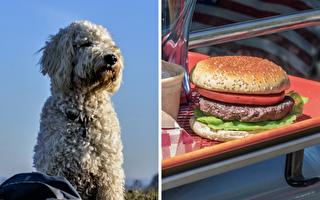 「主人妳不是要減肥」盡責狗狗瞬間咬走漢堡