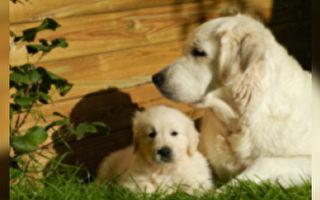 男子想抱小狗 狗妈妈护子就是不放手