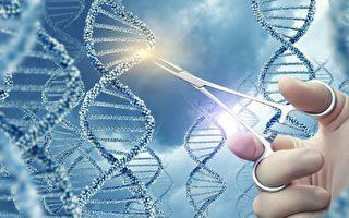 Crispr編輯人類胚胎再遭質疑