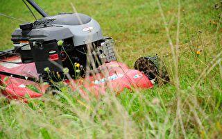 比扫地机还厉害 自动割草机轻松完成任务
