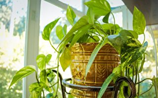 多肉植物种在壁画板上 打造自己的小花园