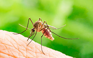 美国男孩被染病毒蚊子咬后差点丧命