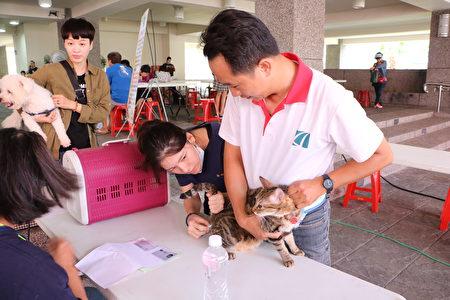 猫儿也接受量测肛温,没发烧。