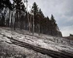 2018年8月23日,在卑诗Fort Fraser附近被Shovel Lake山火烧毁的林地。(加通社)
