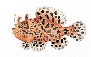 你見過會在海底走路的怪魚嗎?
