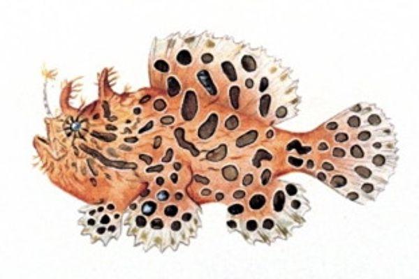 你见过会在海底走路的怪鱼吗?