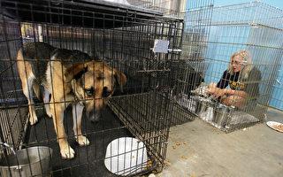 市议员拟推新法 宠物店限售流浪猫狗