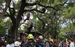 結合環保與休閒 集集辦綠色隧道攀樹體驗