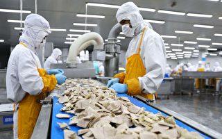 猪瘟蔓延下 深圳发现大量无证猪肉来源不明