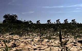 高溫減產 荷蘭果蔬價格恐大漲