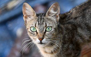 全球首例 新西蘭兩社區擬發布禁貓令