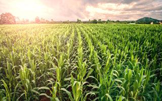 加拿大14种常见食品中含除草剂引争议