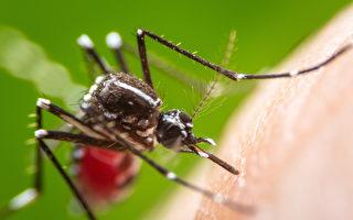 多伦多今夏27人感染西尼罗病毒