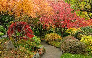 安省今秋溫和 未來兩月盡享秋色