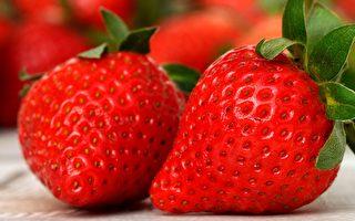 维州面临草莓供应短缺