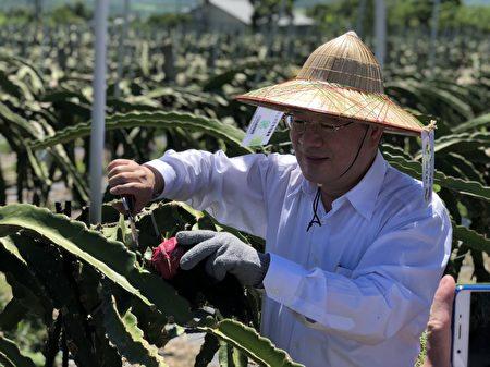 農糧署長胡忠一等人到台東阿裕果園進行採果、套袋體驗。