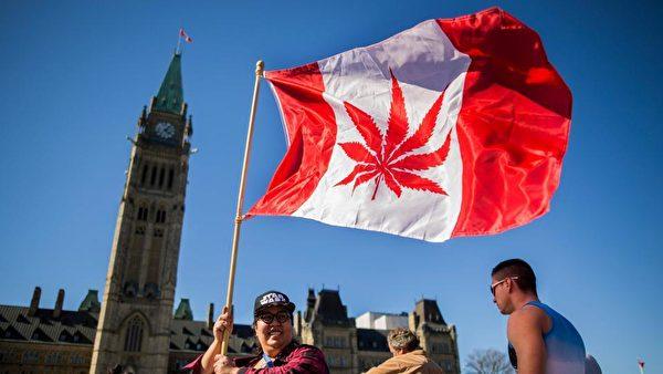加拿大大麻合法化在即,大麻對身體的影響越來越受關注。圖為反對者將大麻印在國旗上,以示抗議。(法新社)