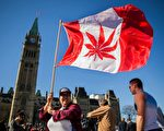一名加拿大妇女在加拿大议会外挥舞将加拿大国旗图案上的枫叶修改为大麻叶的旗帜。枫叶国变成大麻叶国?(AFP)