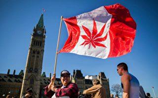 加拿大大麻合法化:你需要了解的争议与真相