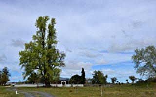 新洲內陸地區房產投資有望穩固增長